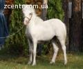 5 пони. Лошадь кобыла конь осел сбруя
