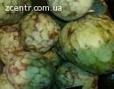 Аннона черимойя (сахарное яблоко) - ПЛОДЫ, семена, растения!