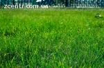 Благоустрій та озеленення територій, ділянок Гостомель