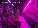 Фитолампа для рассады и комнатных цветов ( фито лампа )