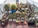 Коллекция кактус