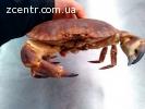 Крабы живые лобстеры омары лангустины морепродукты
