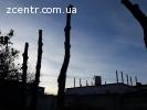 Кронирование, обрезка, порезка деревьев Боярка