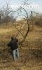 Обрезка плодовых деревьев сада Кронировка Удаление Киев