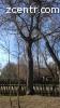 Орех 2 дерева 2000+1000 грнХмельницкая 30км от Славуты или К