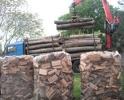 Продам дрова Чурки, бревна колотые  дубовые купить Киев