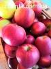 Продам яблука Гала