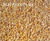Продам кукурудзу 2018 року врожай