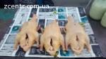Продам мясо домашней утки