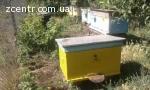Продам пасека, пчелы, пчелосемьи