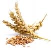 продам пшеницу 17 тонн на элеваторе