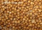 Продам семена кориандра, кинзы