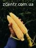 Продам супер сладкую кукурузу Landmark,Ракель,Megatone.