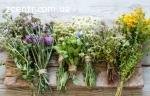 Продамо лікарсько рослинна сировина