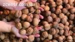Продажа грецкого ореха в Украине оптом