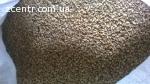 Пшениця, ячмінь, овес