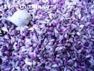 Семена чеснока продам сорт Софиевский