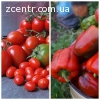 Семена перца, томатов, помидор, паприка