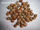 Семена табака махорки сорта -(Мапачо).Высокорослой.