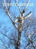 Спил деревьев Киев Удаление пней расчистка участка