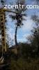 Спил деревьев, расчистка участка Ворзель