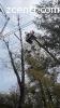 Спил и обрезка деревьев в Киеве и области