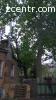 Спиливание деревьев Буча