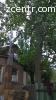 Срезать дерево Борисполь  Обрезка деревьев Борисполь