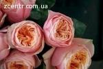 Цветы, Растения оптом из Голландии, Эквадора, Китая, Израиля