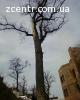 Удаление деревьев Киев Спил аварийных веток Выкорчевка пней