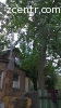 Удаление пней, корчевка, спил деревьев Бородянка
