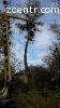 Удаление, спил деревьев Борщаговка