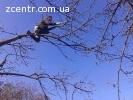 Валка деревьев Киев, корчевка пней расчистка участка
