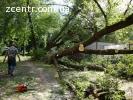 Вырубка участка Выкорчевка деревьев пней зарослей
