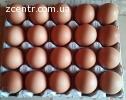 Яйца куриные, столовые!Производитель